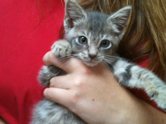 6 kittens for adoption | Miami Natural Pet Care